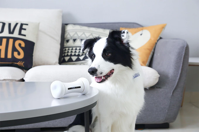 WICKEDBONE: Smart & Interactive Dog Toy-GadgetAny